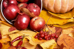 Fundo do outono, frutas e legumes nas folhas caídas amarelas, maçãs e abóbora, decoração no estilo country, tom do marrom escuro Fotos de Stock