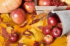 Fundo do outono, frutas e legumes nas folhas caídas amarelas, maçãs e abóbora, decoração no estilo country, tom do marrom escuro Imagens de Stock Royalty Free