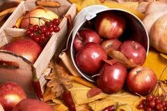 Fundo do outono, frutas e legumes nas folhas caídas amarelas, maçãs e abóbora, decoração no estilo country, tom do marrom escuro Fotografia de Stock