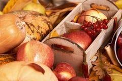 Fundo do outono, frutas e legumes nas folhas caídas amarelas, maçãs e abóbora, decoração no estilo country, tom do marrom escuro Foto de Stock