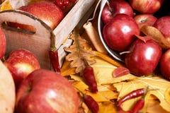 Fundo do outono, frutas e legumes nas folhas caídas amarelas, maçãs e abóbora, decoração no estilo country, tom do marrom escuro Fotografia de Stock Royalty Free