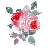 Fundo do overwhite da flor do vintage O casamento floresce o pacote Flor de rosas tiradas da aquarela mão detalhada foto de stock royalty free