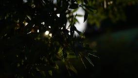 Fundo do por do sol através dos ramos de árvore video estoque