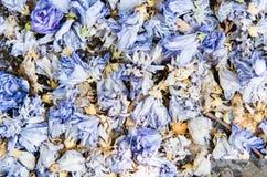 Fundo do pot-pourri azul colorido fotografia de stock