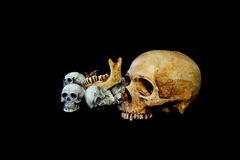 Fundo do preto do crânio de muitas cabeças Fotografia de Stock Royalty Free