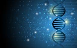 Fundo do projeto do sumário da estrutura do ADN da ciência Fotografia de Stock Royalty Free