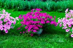 Fundo do projeto do jardim Ajardinando no parque com flores roxas, a luz natural, copia o espaço, Fotos de Stock