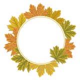 Fundo do quadro do círculo das folhas de outono Projeto colorido das folhas de bordo ilustração royalty free