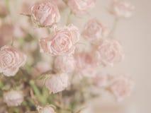 Fundo do ramalhete da rosa da cor pastel para o texto Imagem de Stock