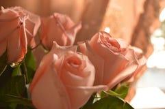 Fundo do ramalhete das pétalas de Rose Many Gentle Pink Buds fotos de stock
