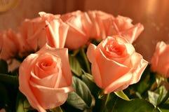 Fundo do ramalhete das pétalas de Rose Many Gentle Pink Buds fotografia de stock royalty free