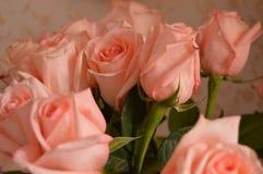 Fundo do ramalhete das pétalas de Rose Many Gentle Pink Buds imagens de stock royalty free