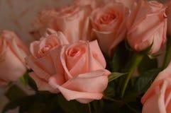 Fundo do ramalhete das pétalas de Rose Many Gentle Pink Buds fotografia de stock