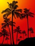 Fundo do retrato da floresta das palmeiras Fotos de Stock Royalty Free