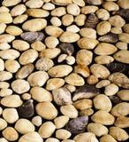 Fundo do Seashell Fotografia de Stock Royalty Free