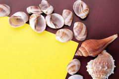 Fundo do shell do mar Foto de Stock Royalty Free