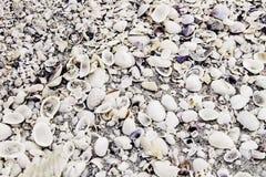 Fundo do shell do mar Foto de Stock Royalty Free