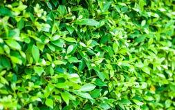 Fundo do sumário da planta verde, beleza da natureza, sentimento reconfortante Imagens de Stock Royalty Free
