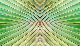 Fundo do sumário da textura das plantas de banana fotografia de stock