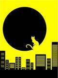 Fundo do sumário do gato da cidade Imagem de Stock