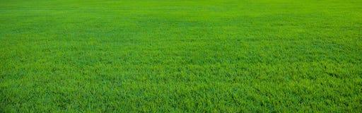 Fundo do teste padrão bonito da grama verde Imagens de Stock