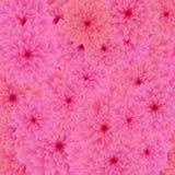 Fundo do teste padrão de flor de Rosa Ilustração Stock