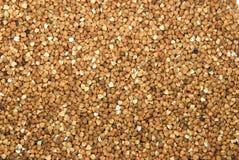 Fundo do trigo mourisco Imagem de Stock