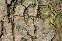 Fundo do tronco de árvore Foto de Stock Royalty Free