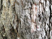 Fundo do tronco de árvore Imagens de Stock