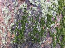 Fundo do tronco de árvore Imagem de Stock