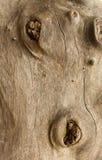 Fundo do tronco de árvore velho nos clos Imagens de Stock