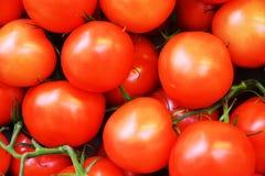 Fundo do vegetal dos tomates Imagens de Stock