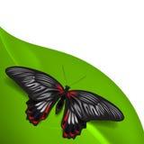 Fundo do verão com borboleta Fotos de Stock