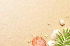 Fundo do verão com folha de palmeira e shell verdes Textura da praia Copie o espaço Vista superior imagem de stock