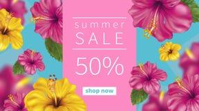 Fundo do verão com hibiscus Fotos de Stock Royalty Free