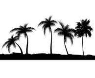 Fundo do verão com palmeiras. Illustra do vetor Foto de Stock