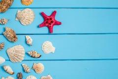 Fundo do verão, conchas do mar no fundo de madeira azul Foto de Stock