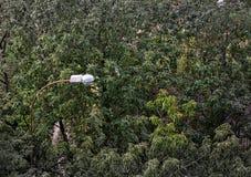 Fundo do verão Folhas, árvores, lâmpada Imagem de Stock Royalty Free