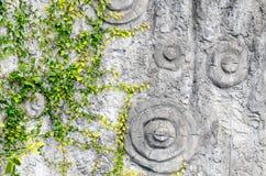 Fundo do verão Folhas do verde na casca de árvore Imagens de Stock