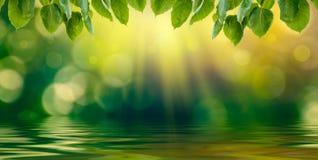 Fundo do verde do borrão de Bokeh da reflexão da água fotos de stock