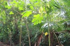 Fundo do verde da atmosfera da floresta húmida da selva Imagens de Stock