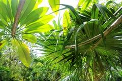 Fundo do verde da atmosfera da floresta húmida da selva Fotos de Stock Royalty Free