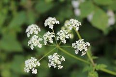 Fundo do verde da flor branca fotografia de stock