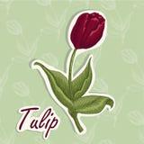 Fundo do vetor com flor Ilustração do desenho da mão de uma tulipa ilustração stock