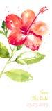 Fundo do vetor com o hibiscus vermelho da aquarela ilustração stock