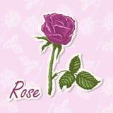 Fundo do vetor com uma flor Ilustração do desenho da mão de Rosa ilustração royalty free