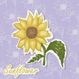 Fundo do vetor com uma flor Ilustração do desenho da mão do girassol ilustração stock