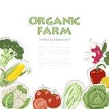 Fundo do vetor com vegetais orgânicos Apropriado para anunciar a exploração agrícola orgânica ou um estilo de vida saudável Fotos de Stock Royalty Free