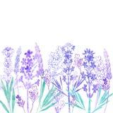 Fundo do vetor de PrintFloral com flores da alfazema e lugar para o texto Ilustração da aguarela em um fundo branco invitation Fotografia de Stock Royalty Free