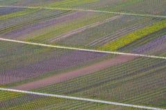 Fundo do vinhedo do vale de Mosel Imagem de Stock